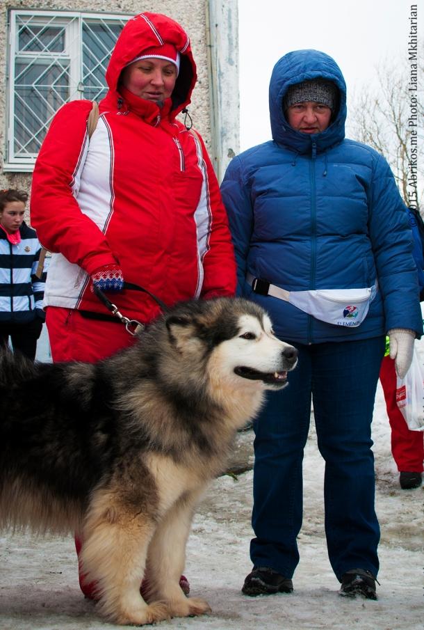 Гонки на собаках. Мурманск